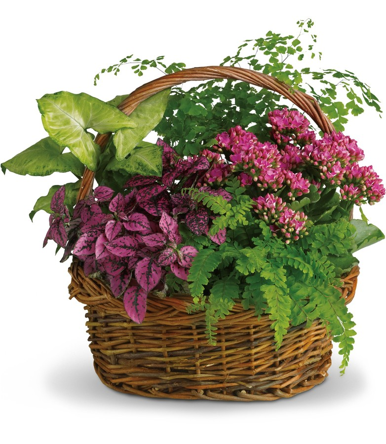 Secret Garden Plant Basket